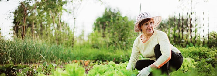 Chiropractic Morrison Chiropractic Gardening